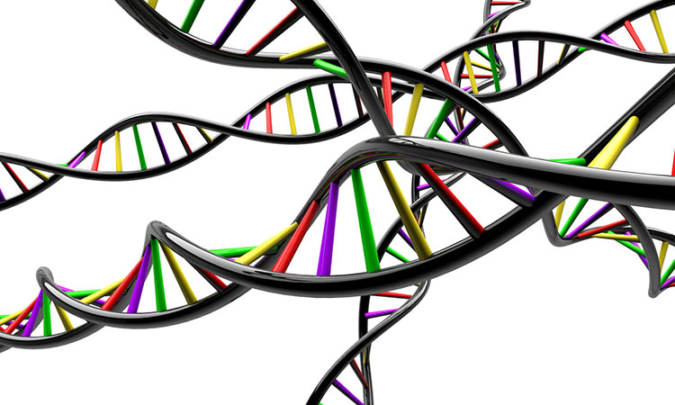 Biology and business: genes and employee performance